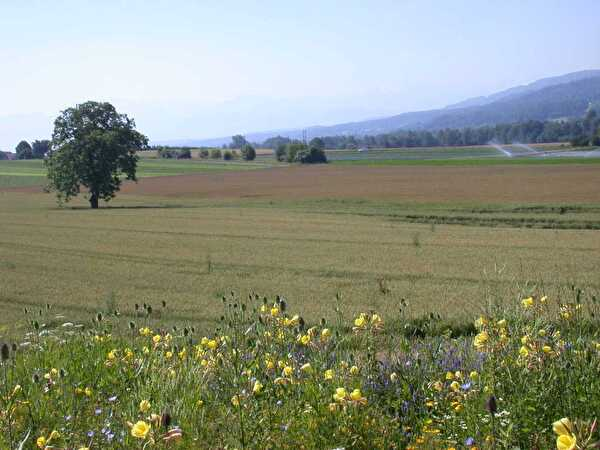 Landschaft Dübendorf