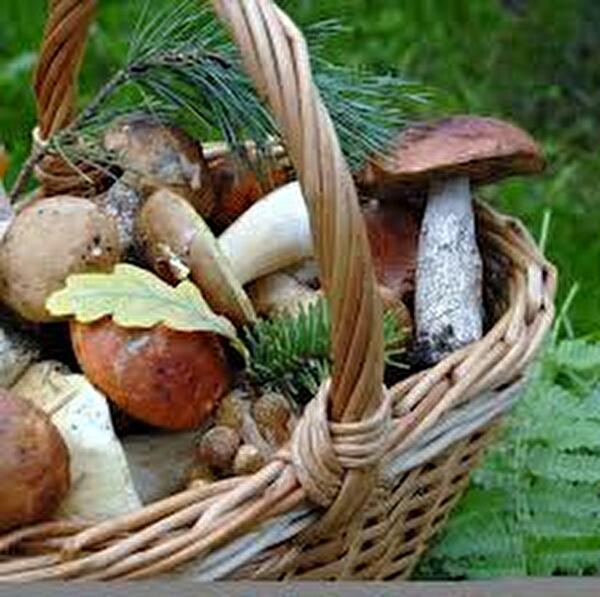 champignons dans un panier