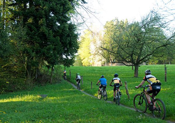 Auf dem Bild sieht man Velofahrer im Wald.
