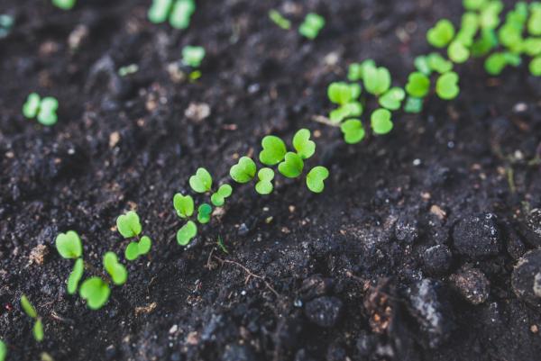kleine Pflanzen spriessen aus der Erde
