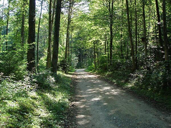 Weg zur Waldhütte