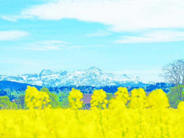 Frühling in Amriswil