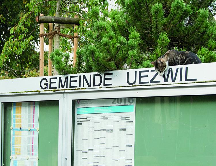 Dorf Katze