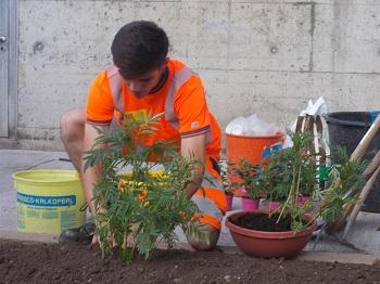 Rabatten pflanzen