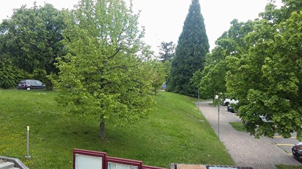 Grünfläche neben dem Gemeindehaus