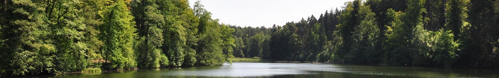 Waldweiher Gattikon