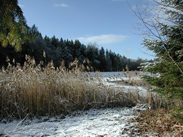 Waldweiher