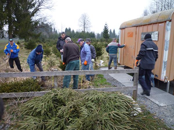 Die Helfer stehen vor einem Haufen Tannen, welche eingepflanzt werden müssen