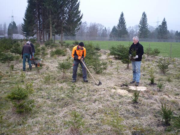 Die Helfer der Gruppe Natur 60+ beim setzen der neuen Christbäume