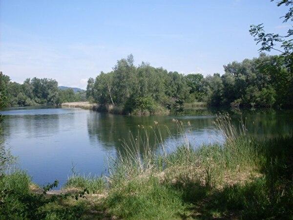 Schönes Foto vom alten Rhein im Hintergrund Schilf und Bäume