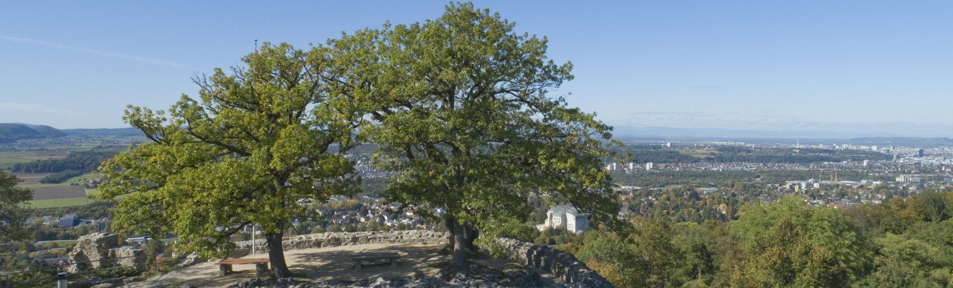 Das Bild zeigt zwei Bäume auf der Ruine Dorneck