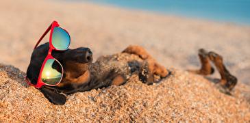 Hund am Strand mit Sonnenbrille