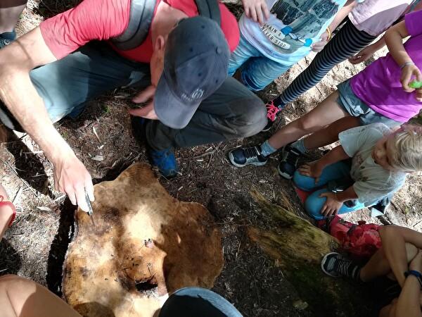 mit dem Förster unterwegs im Wald