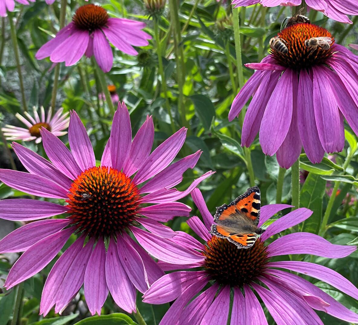 Blumen mit Bienen und Schmetterling