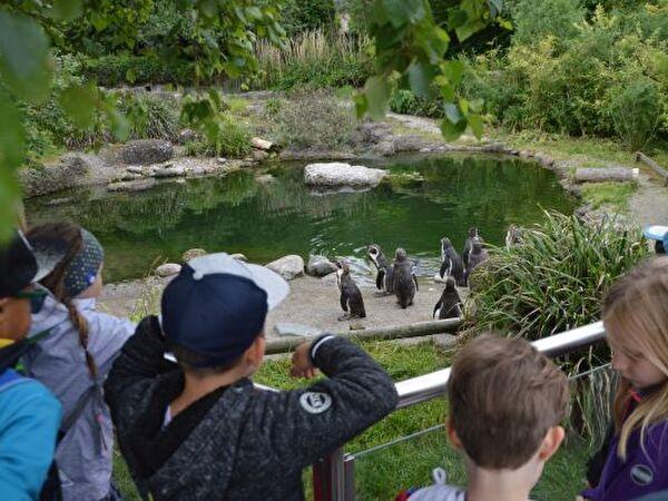 Ausflug in Zoo Zürich zu den Pinguinen