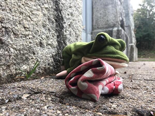 Aqua Viva im Kindergarten - Frosch am Platz