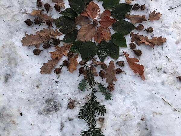 Mandala aus Blättern und Ästen im Schnee