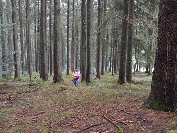 Gottschalkenberg-Wald