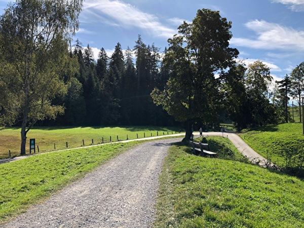 Wanderweg, grüne Bäume, Holz Bank, Natur Schutz Gebiet