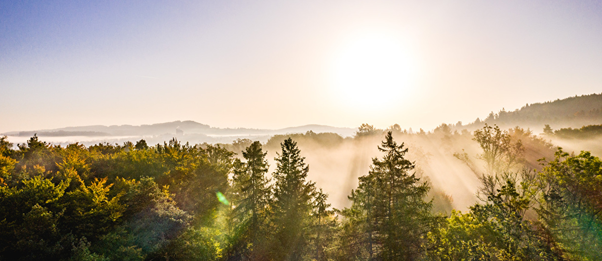 Sonne mit Wald