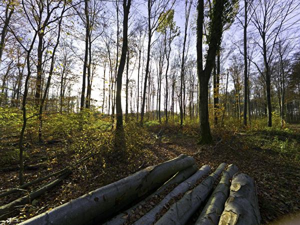 Naturnaher Waldgürtel Pfärrich
