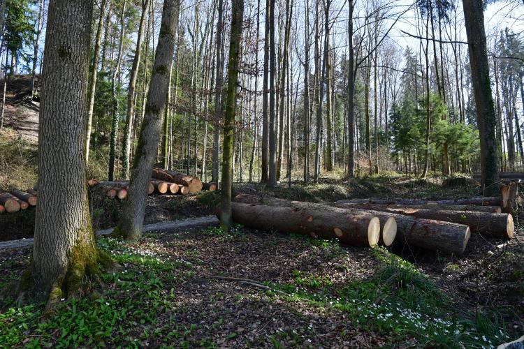 Abfleckenwald