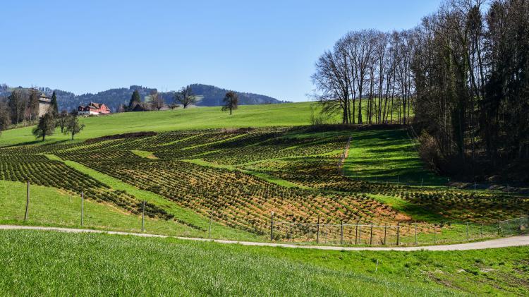 Pachtland im Schlossberg