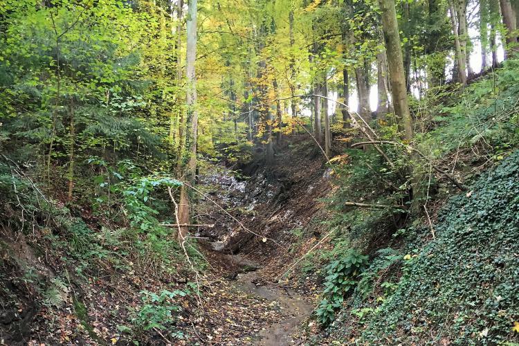 Eschlenwald