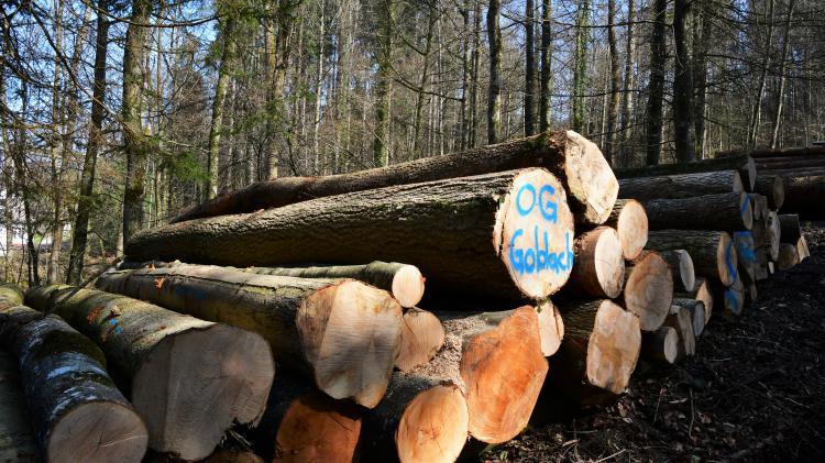 Holzschlag im Rantelwald