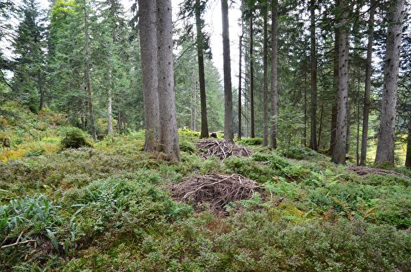 Waldbiodiversität