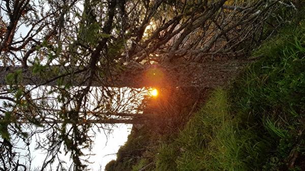 Foto Sonnenaufgang im Wald