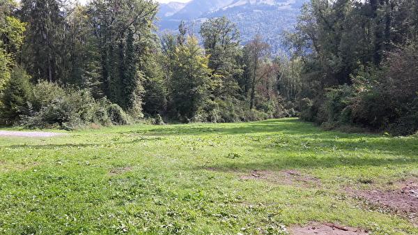 Zeltplatz Forstwald 2 liegt in einer Waldlichtung
